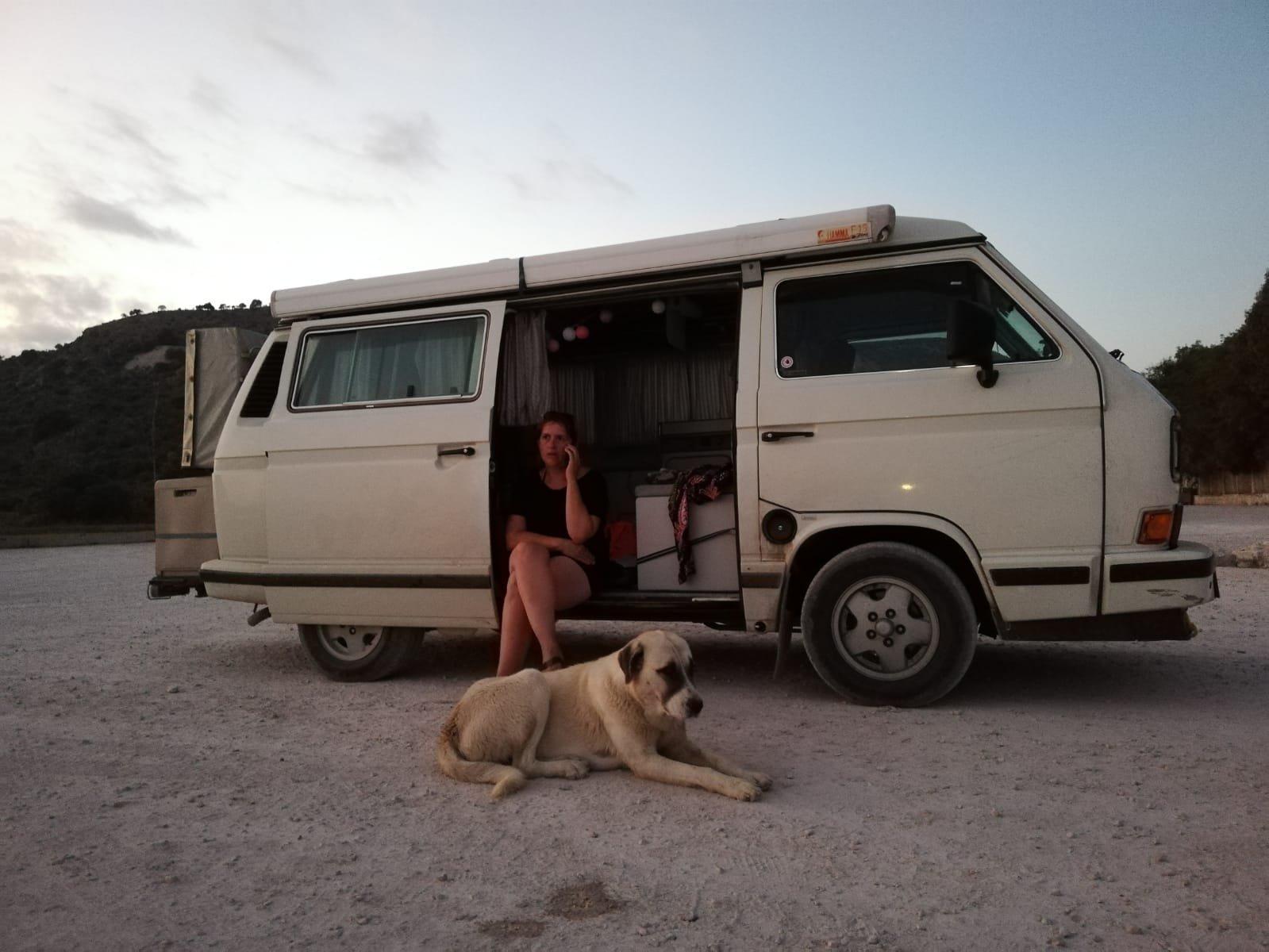 Straßenhund Albanien Butrint