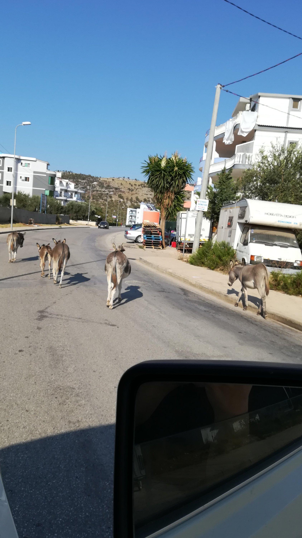 Esel in ALbanien in der Stadt Ksamil