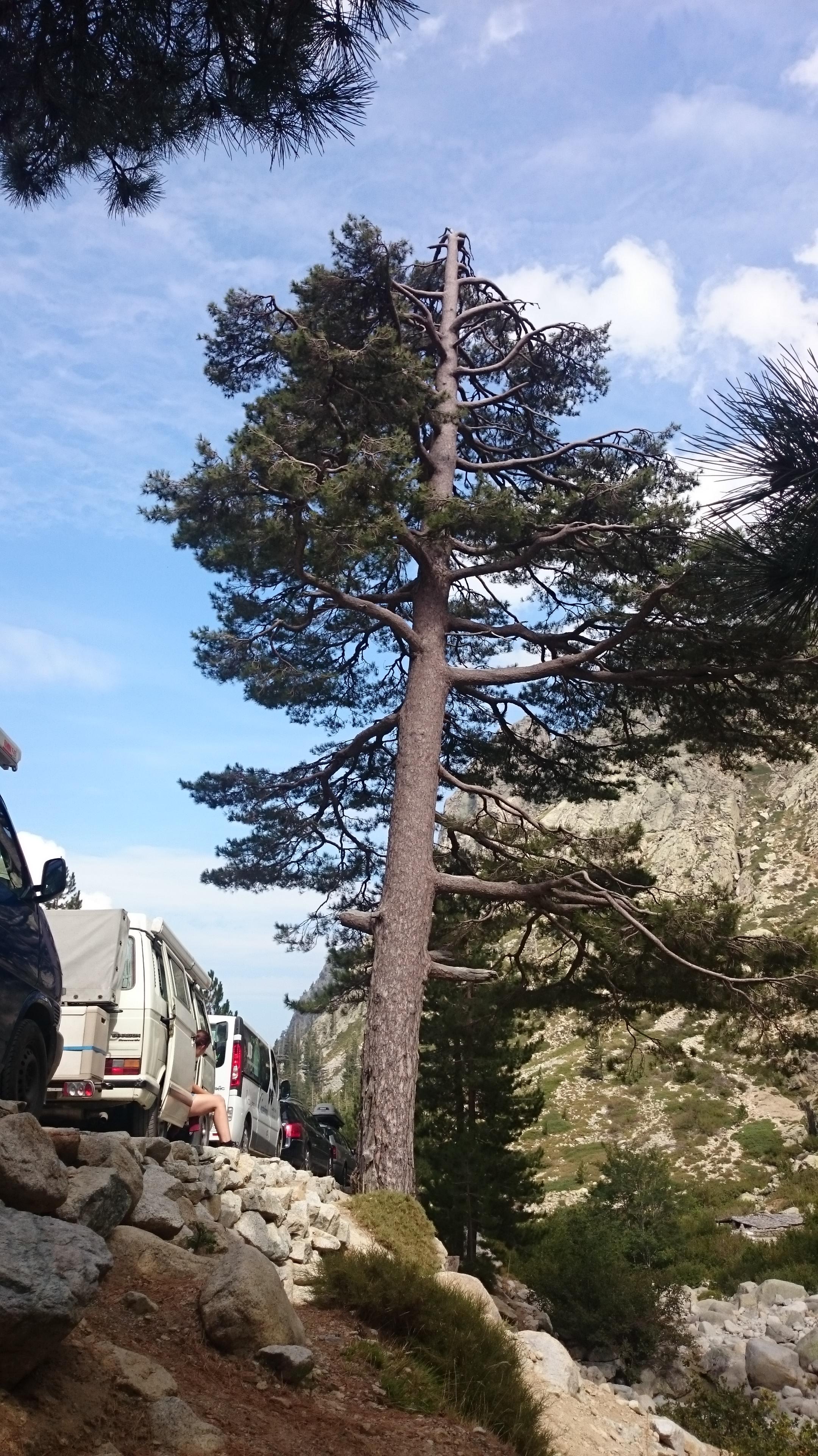 Parkplatz Restonica Tal Korsika