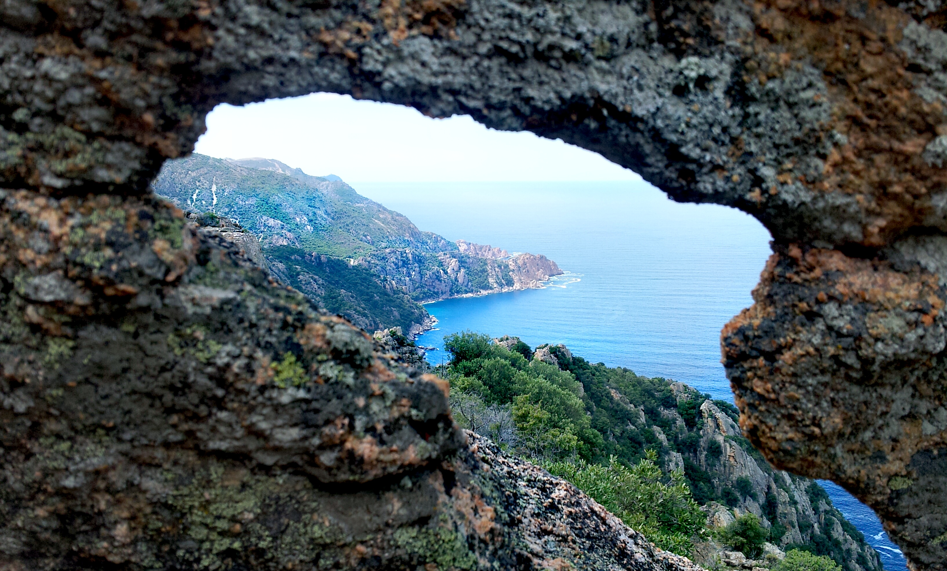 Delphin Tafoni in der Calanche auf Korsika
