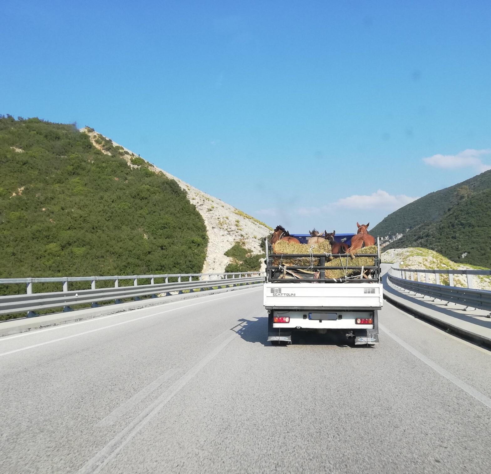 """<img src=""""/autobahn-albanien.jpg"""" alt=""""Offener Pferdetransporter auf der einzigen Autobahn Albaniens"""">"""