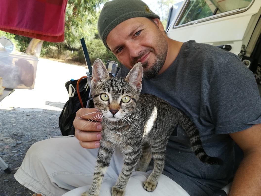 Katze am Ostriconi Camping