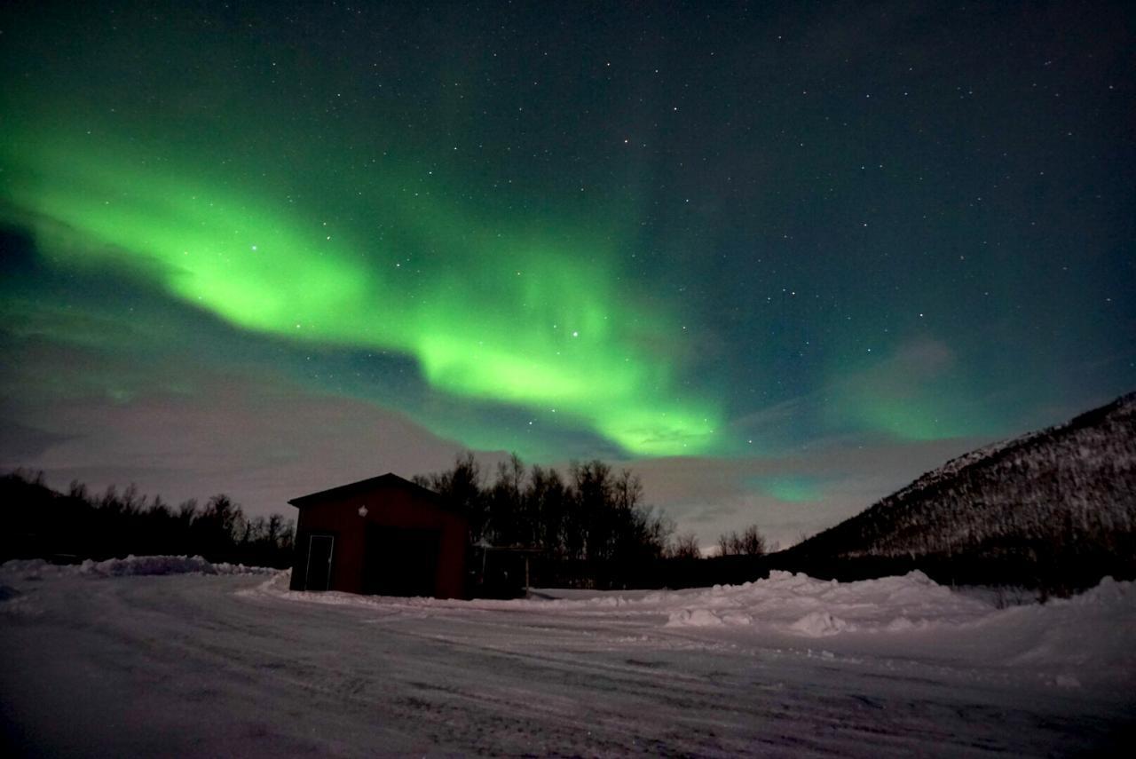 Polarlichter in Schweden