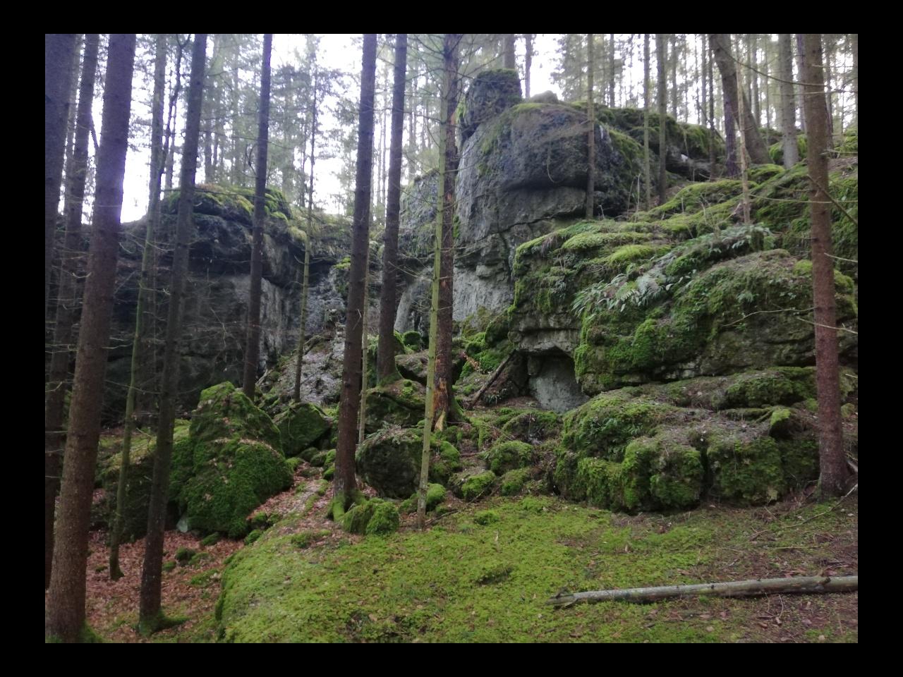 Moos und Fels Pottenstein