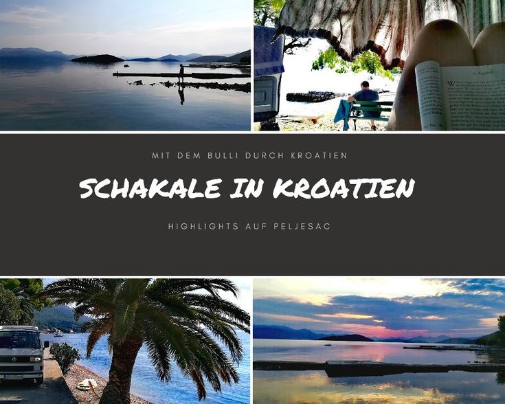 Schakale in Kroatien