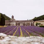 Lavendelfelder Provence Frankreich