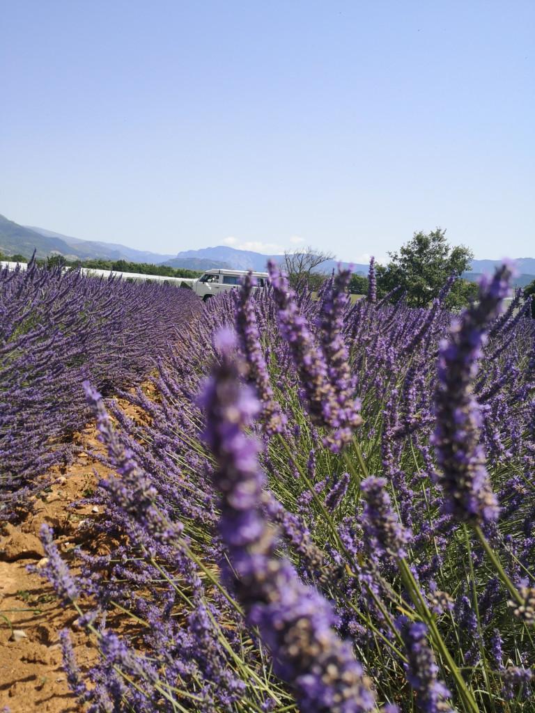 VW T3 Provence Lavendel
