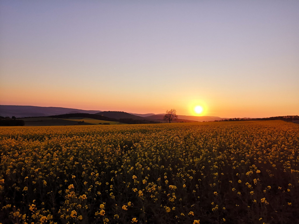 Hohe Geba bei Sonnenuntergang Sternenpark Rhön