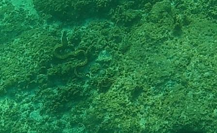 Muräne auf Korsika