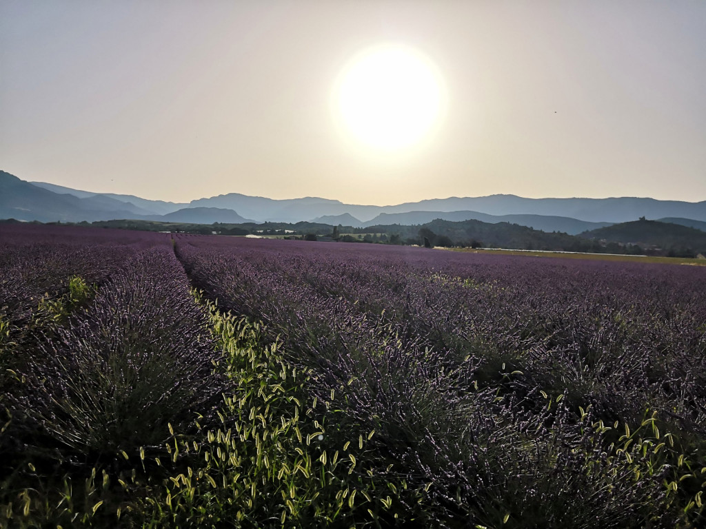 Provence Frankreich France Passion